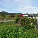 مصنع نبيذ , بادن ,النمسا , 2425/433