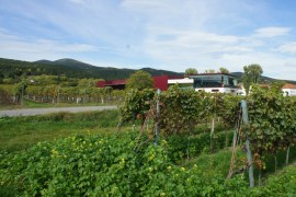 مبنى وارض زراعية , بادن ,النمسا-433_01_start
